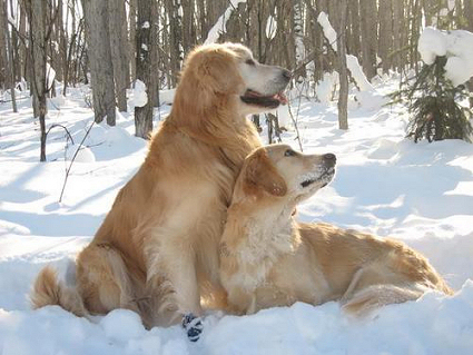 Hogyan gondozzuk télen a kutyánkat? A legfontosabb tudnivalók