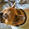 Hogyan gondozzuk télen a kutyánkat?
