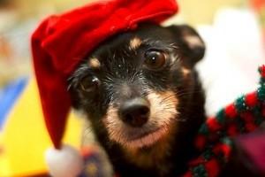 Karácsonykor a kutyák is énekelnek! Videó