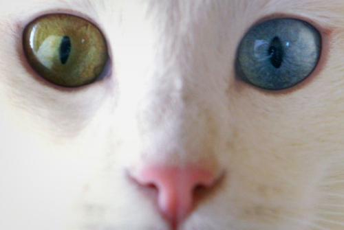 cica-kepek-szemek