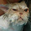 A világ legjobb macskafotói