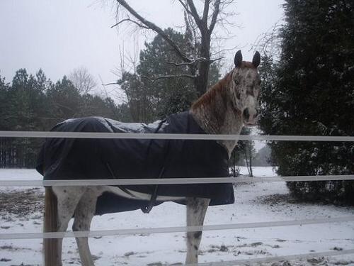 ló, tél, pata