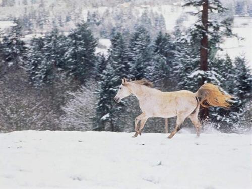 ló, takarmány, tél