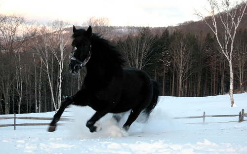 ló, tél, fagy