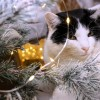 Macskabiztos karácsonyfa?