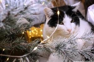 Így tedd macskabiztossá a karácsonyfát