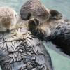 Őrület: megtaláltuk az öt legjobb állatos videót a neten!