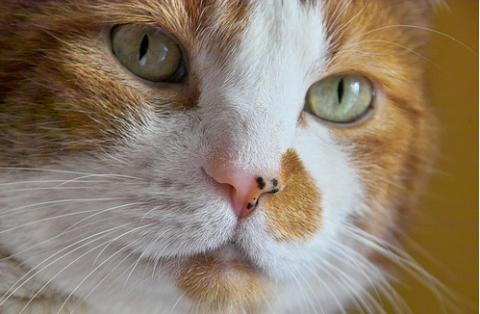 Részlet egy szemtelen macska naplójából...
