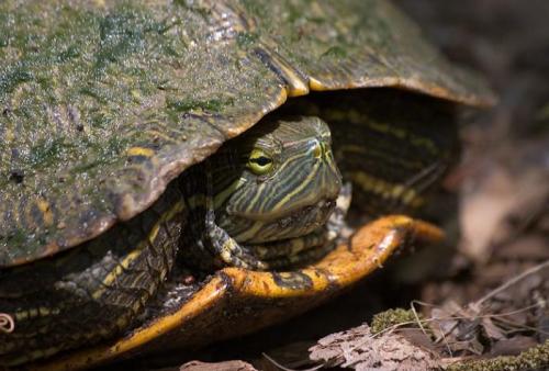Teknősök rejtett bajai: mikor rohanjunk orvoshoz?