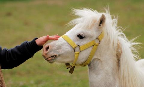 Hogyan barátkozz meg bármely lóval?