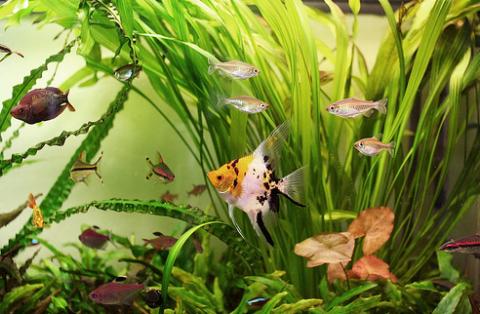 Miről ismerjük fel a beteg halat?