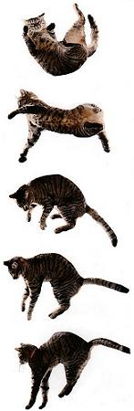 Tényleg mindig-mindig a talpára esik a macska?