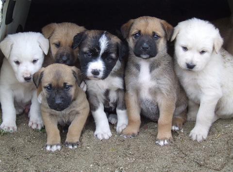 Honnan vásároljunk kutyát?