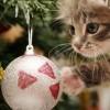 Hogyan telik a benti macska karácsonya?