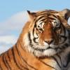 Kitermelték az orrszarvú és a tigris feje fölül az erdőt