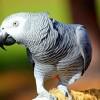 Nem semmi: itt vannak a legjobb papagájos videók!