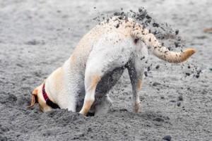 Kutyám gödröket ás és megrágja a növényeket. Mit tegyek?
