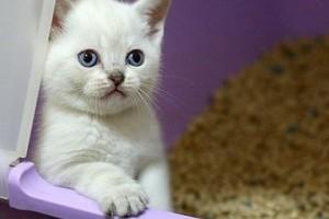 Ha a cica az alom mellé pisil...