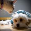 Kutya- és macskabiztosítás állatorvos szemmel