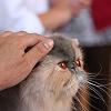 Mi a sikeres állatorvoslás titka?