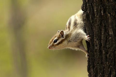 Mivel csábítanak a mókusok?