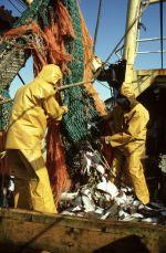 Nemzetközi verseny a halászat megreformálására