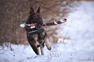 Hogyan ápoljuk télen kutyánk lábát?