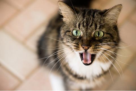 Mit tegyünk, ha a macska válogat és finnyás?