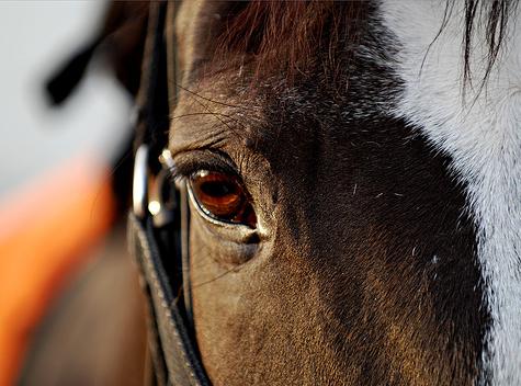 ló nézése