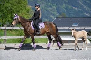 Hogyan kell magunkhoz szoktatni egy lovat?