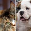 Mit érdemes tudni a Royal Canin-ról