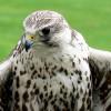 A turul madár és a szélkerekek
