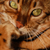 Mikor vágjuk a macska karmát? Túlélési útmutató