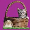 Whiskas Nemzetközi Macskakiállítás és Nyúlbemutató