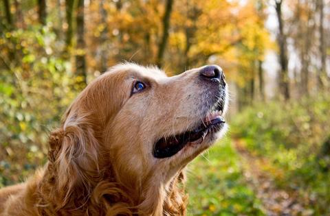 kutya, erdő, természet