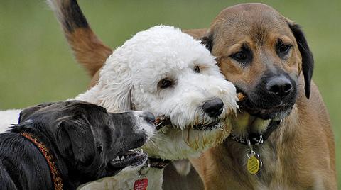 kutya, kutyák