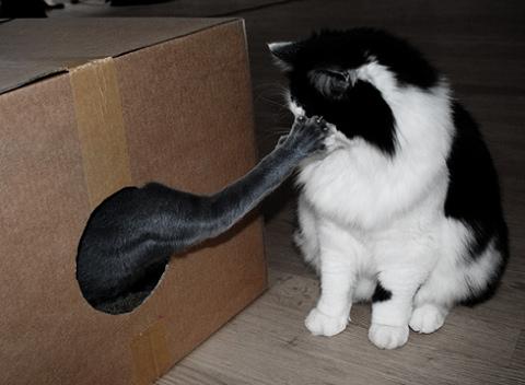 Miért szeret a macskád?
