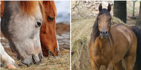 ló, alom, széna