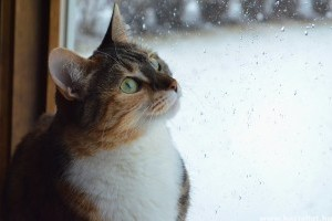 Vajon frontérzékeny a háziállatod?