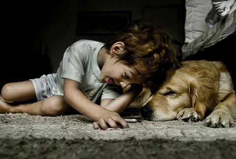 Az állatvédelem aktuális kérdései: állatkínzás, állatrendőrség és rehabilitáció