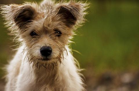 Kutyaszorító: a hazai kóborállat problémáról