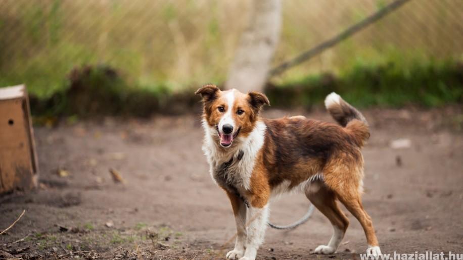 Bolhás kutya, macska: mit tehetünk az élősködők ellen?