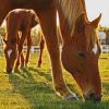 Paci Doki ingyenes lovasterápiát szervez