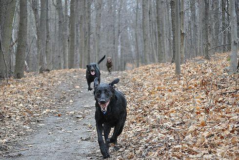hívás, kutya, erdőben