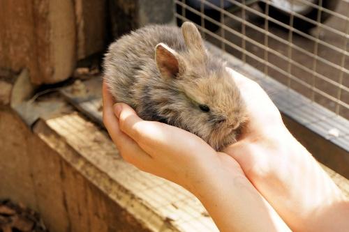 rabbit-1436329_1920