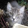 Macskák online élőben!