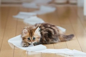 Hogyan védd macskádat a vírusos fertőzésektől?