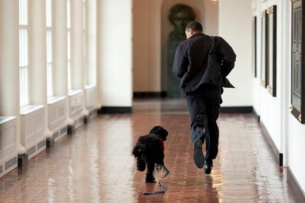 Megérkezett Barack Obama kutyája