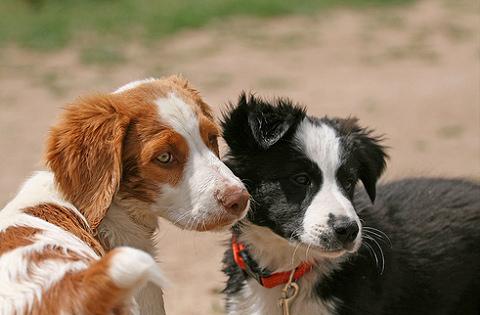 Szeretnél kutyát örökbefogani? Most itt az alkalom!