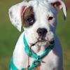 Kedvenceink fülbetegségei - kutya, macska, görény